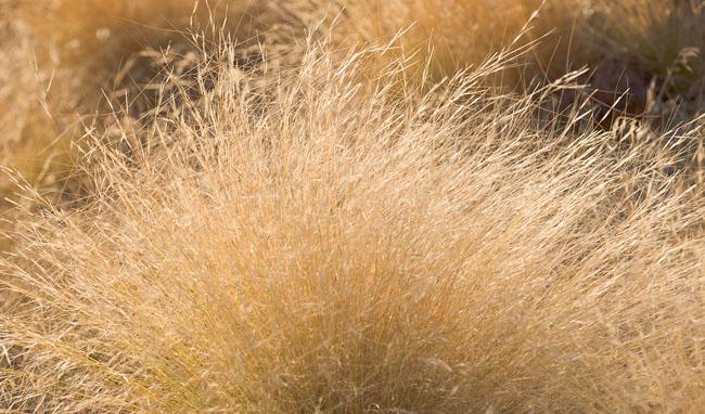 zion grass